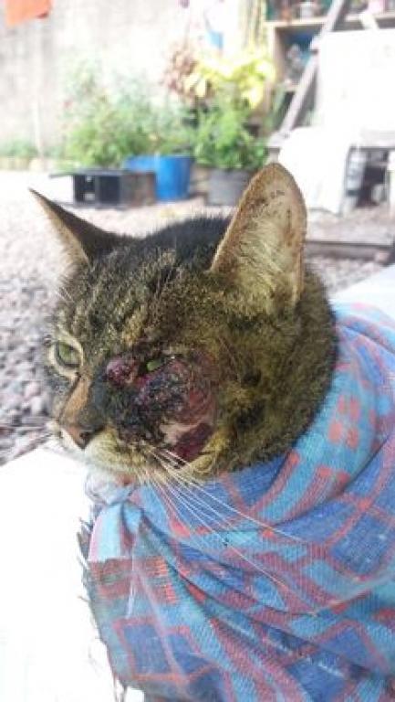 Contaminação em gatos preocupa no Pontal