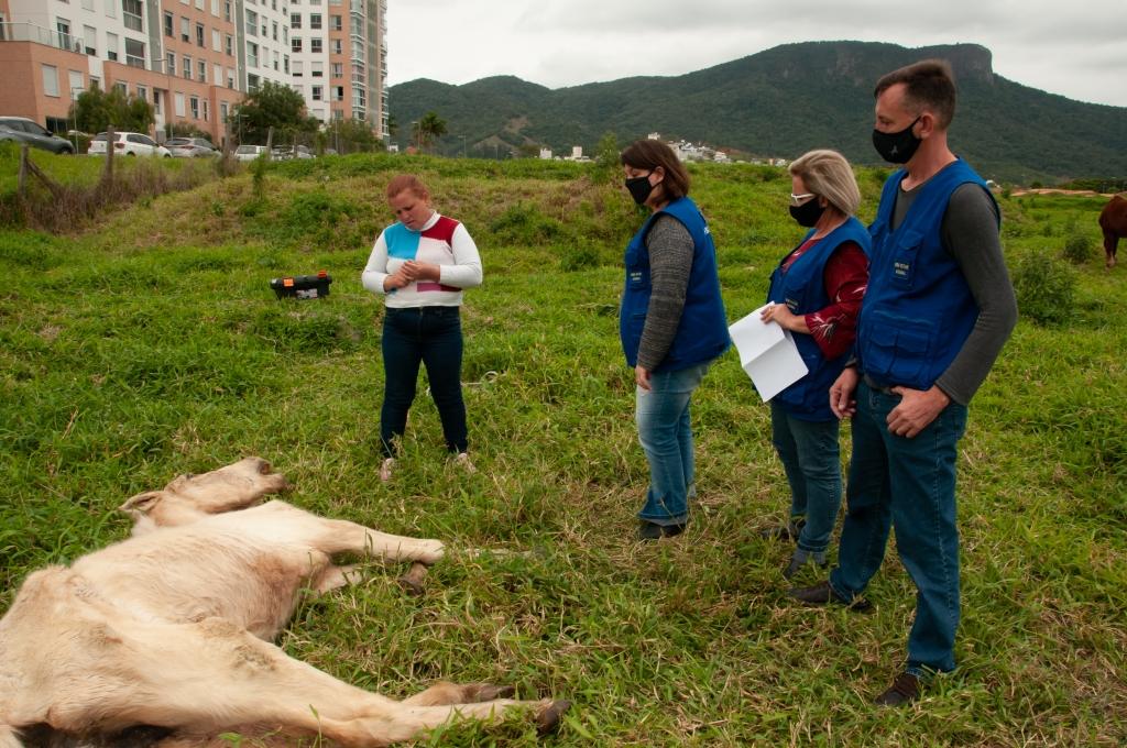Égua encontrada debilitada passará por eutanásia
