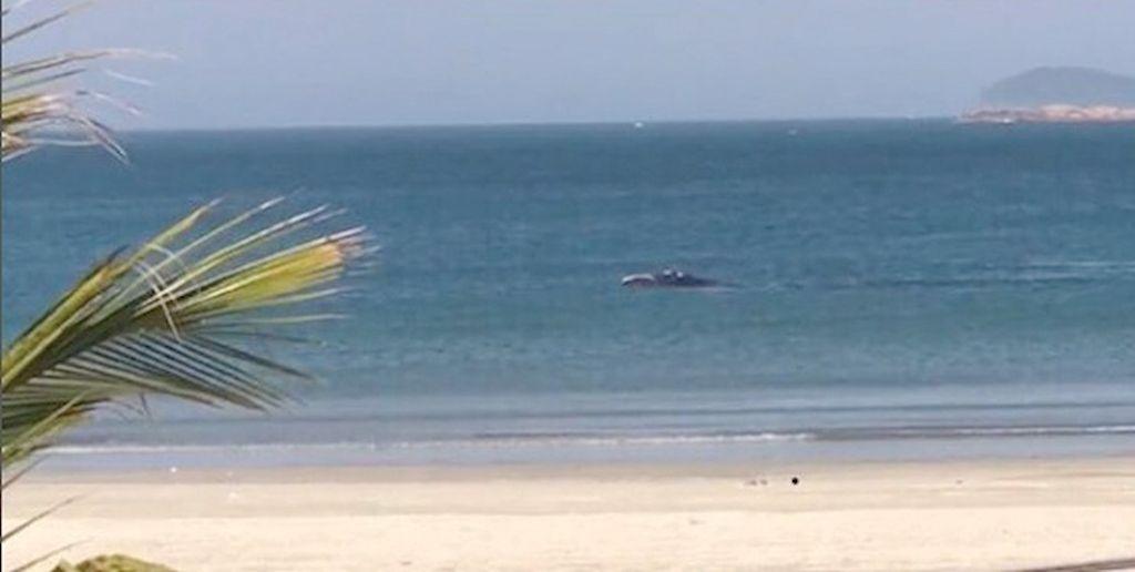 Animais na Ponta do Papagaio: tartaruga, baleia e pinguim