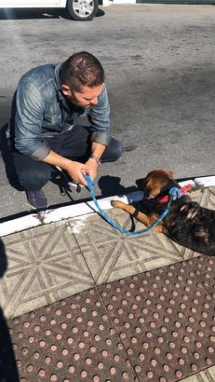Quintino cria projetos em prol da causa animal