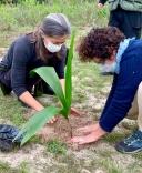 Plantio de mudas marca Dia da Árvore em PH
