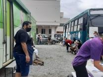 Mutirão castra 120 animais no Frei Damião