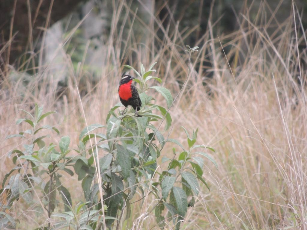 Férias em Palhoça: Observação de pássaros