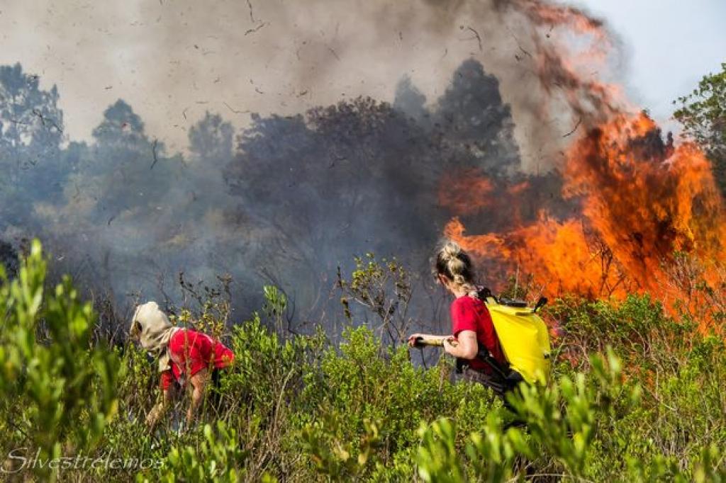 Incêndio destrói vegetação na Serra do Tabuleiro