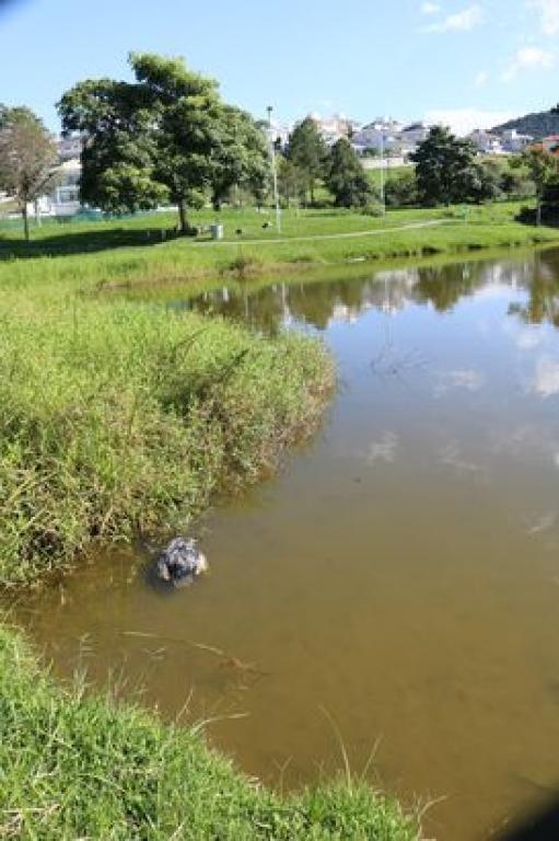 Risco à saúde: evite área de lagos da Pedra Branca