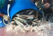 Pescadores de Palhoça terão ajuda para fazer recadastramento nacional