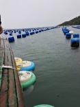 Sec. de Maricultura e Pesca avalia relatório anual