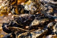 Maricultura: Áreas são interditadas em Palhoça