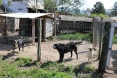 Polêmica reabre debate sobre animais de rua