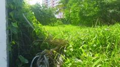 Terreno com mato alto na rua Petúnia
