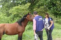 Cavalos abandonados