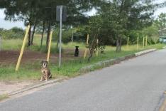 Cães abandonados voltam a gerar polêmica