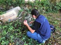 Dengue: força-tarefa fiscaliza ferros-velhos