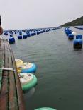 Embrapa pesquisa água em fazendas marinhas