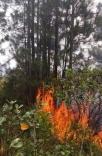 Novo incêndio atinge vegetação do parque