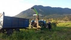 Relatório do IBGE aponta mudanças no cenário rural