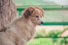 Animais disponíveis para doação
