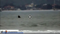 Baleias são avistadas na Pinheira