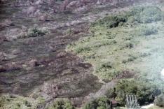 Parque do Tabuleiro: devastação histórica