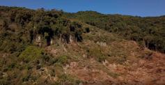 Área verde no Alto Aririú: desmatamento preocupa